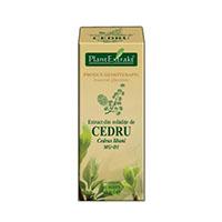Extract din mladite de Cedru 50ml, Plantextrakt