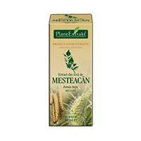 Extract din seva de mesteacan 50ml, Plantextrakt