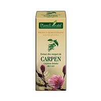 Extract din muguri de carpen 50ml, Plantextrakt