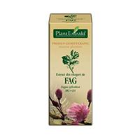 Extract din muguri de fag 50ml, Plantextrakt